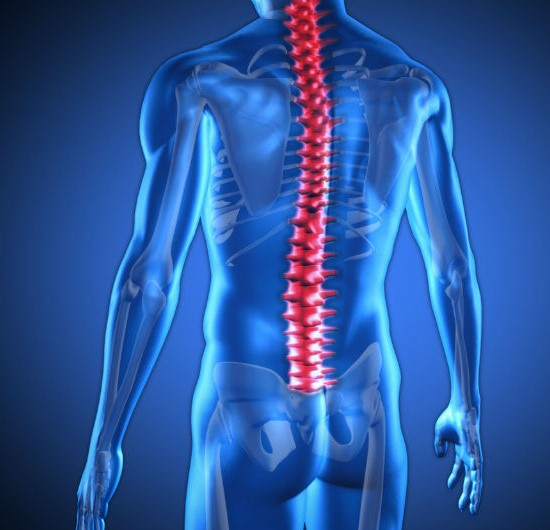 chiropractic spine services