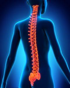Illustration of Human Spine Anatomy. 3D render
